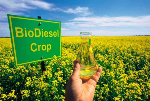 Что такое биодизель